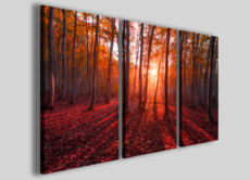 Foto su tela canvas Warm trees quadri moderni alberi arredamento casa