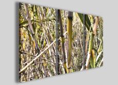 Quadri moderni bamboo art 100 stampe su tela canvas arredo