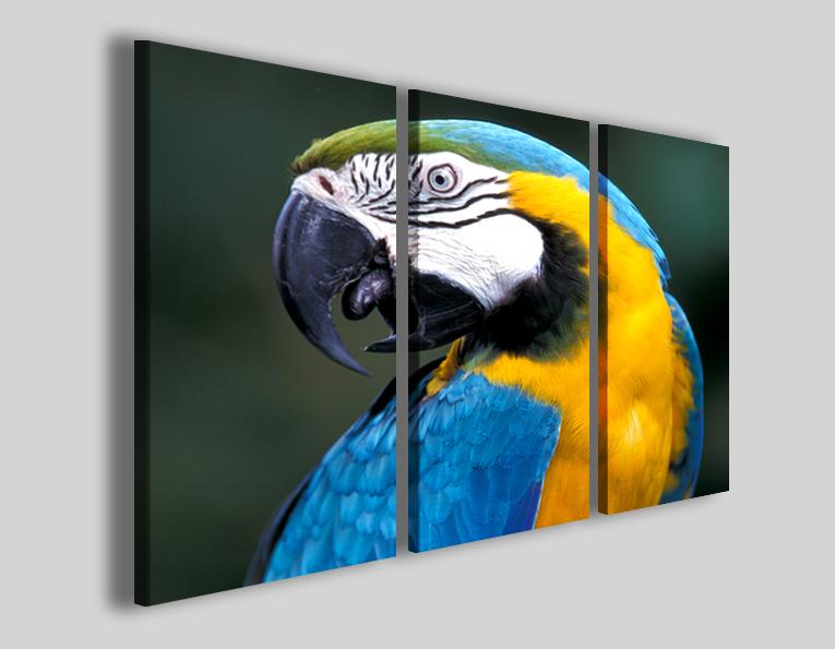 Quadro pappagallo Ara araruna stampe animali