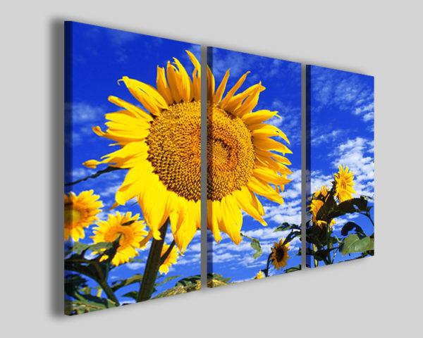 Quadri girasole Color of sun stampe prato fiorito