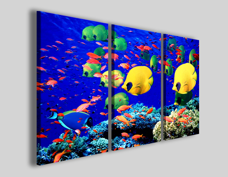 Quadri animali Colors of fish I stampe pesci