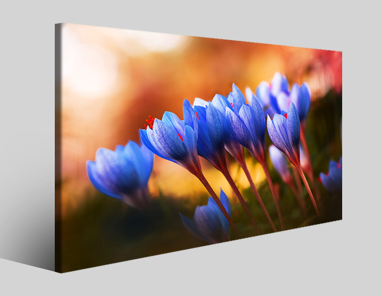 Quadro fiori Crocus friends stampa su tela