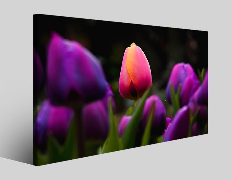 Quadro fiori Focus tulips stampa su tela