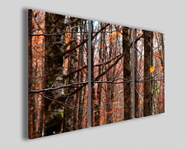 Quadri natura Folie in air stampe fiori e piante bosco autunno