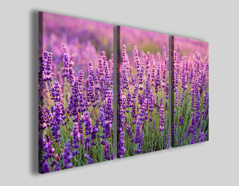 Quadri fiori Lavanda stampa su canvas