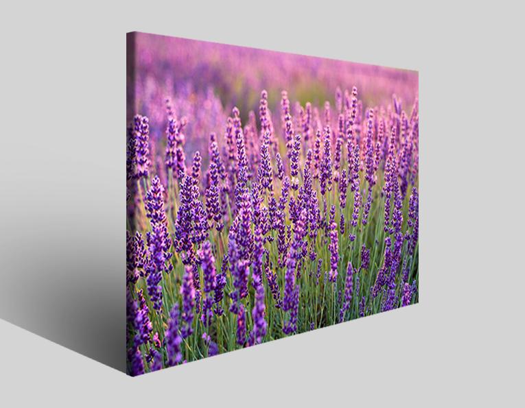 Quadro moderno Lavanda stampe fiori prato canvas