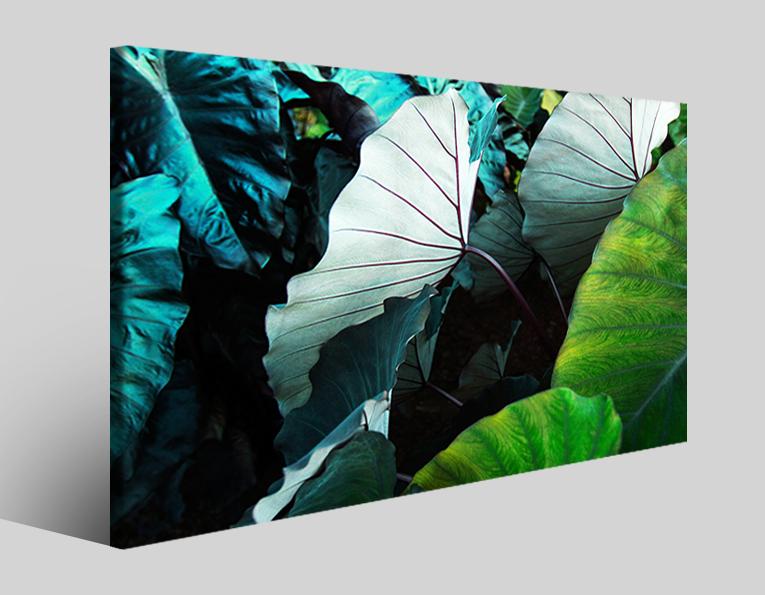 Quadro piante Leaves green stampa su tela