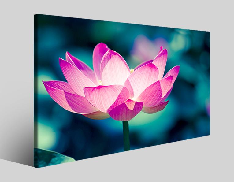 Quadro fiore Lotus lily stampa su tela