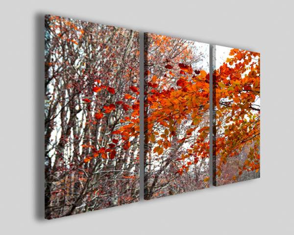 Quadri colorati Alburn orizzontal tree stampe colorate su tela