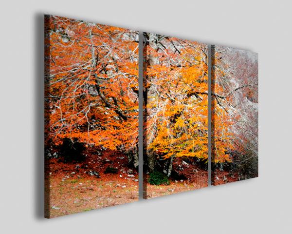 Quadri su tela Alburn big tree stampe su tela canvas