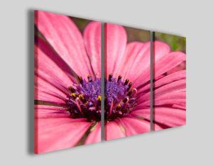 Quadri moderni Purple flower stampe fiori