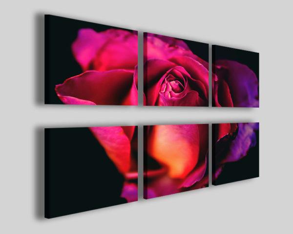 Quadri fiori Purple rose Q6 stampa immagini rosa