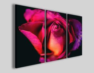 Quadro con rosa Purple rose stampe fiori