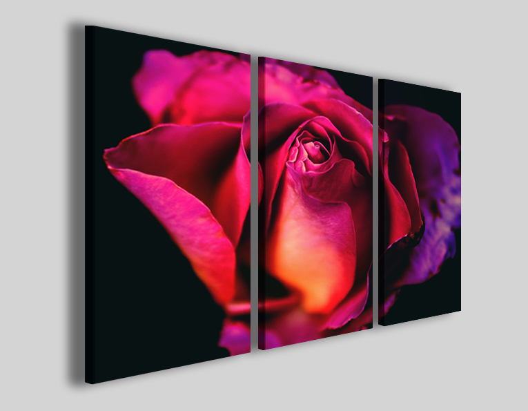 Quadro con rosa Purple rose stampe fiori
