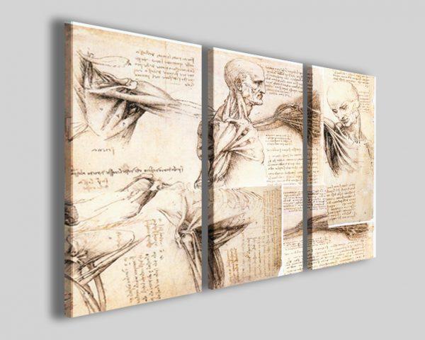 Quadri Leonardo da vinci Anatomical study stampa
