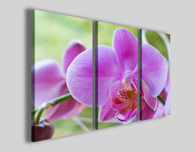Quadri Orchidea stampe su tela fiori