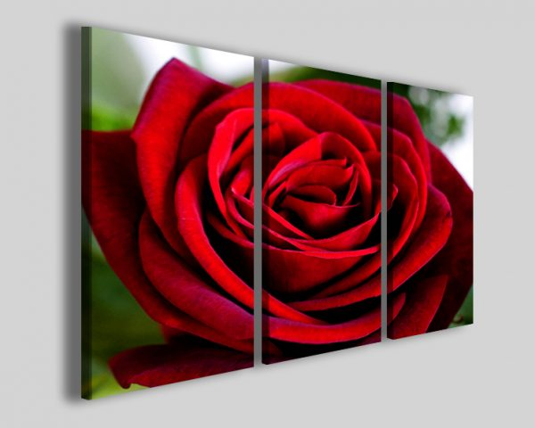 Quadri Red rose I stampe su tela fiori