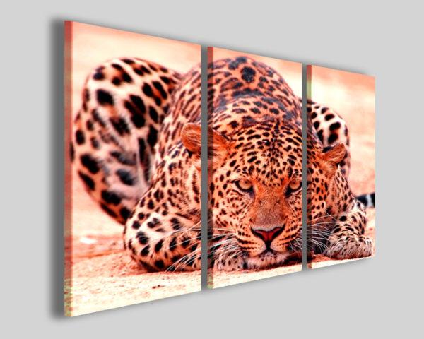 Quadri animali Leopard stampe su tela leopardo immagini savana