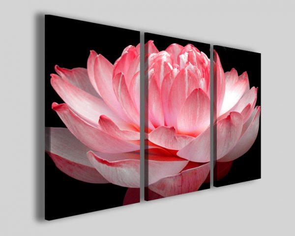 Quadri fiore di loto Lotus flower stampe floreali