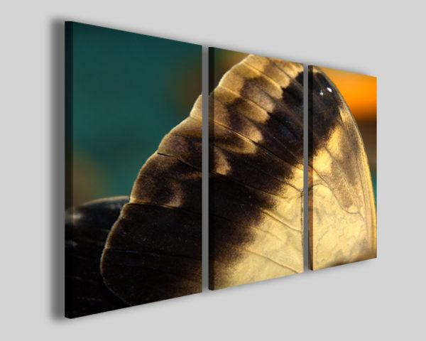 Quadri moderni Colori di una farfalla stampe su tela