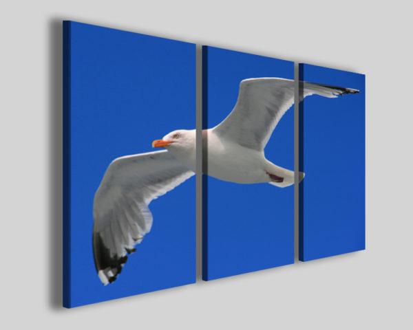 Quadri moderni Gull stampe gabbiano