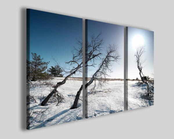 Quadri neve Under snow stampe paesaggi innevati