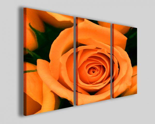 Quadri rosa Orange rose flower stampe fiori