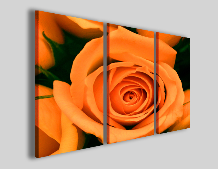 Quadri rosa Orange rose flower stampe fiori
