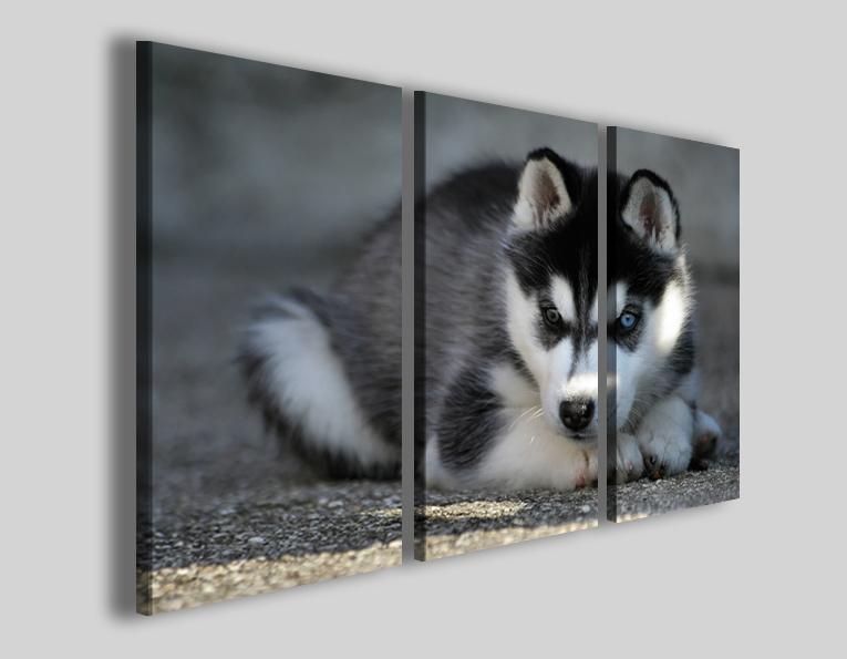 Quadri su tela animali Husky stampe canvas