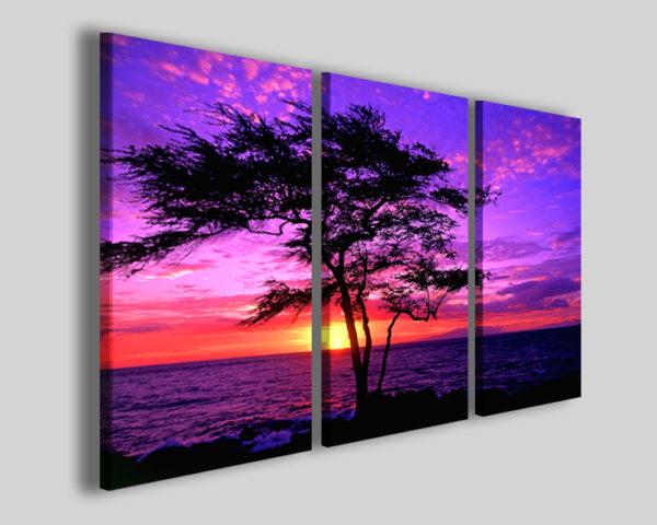 Quadri tramonto kiawe tree sunset stampe hawaii
