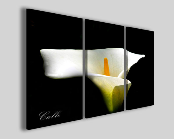 Quadro Calla stampe su tela di fiori