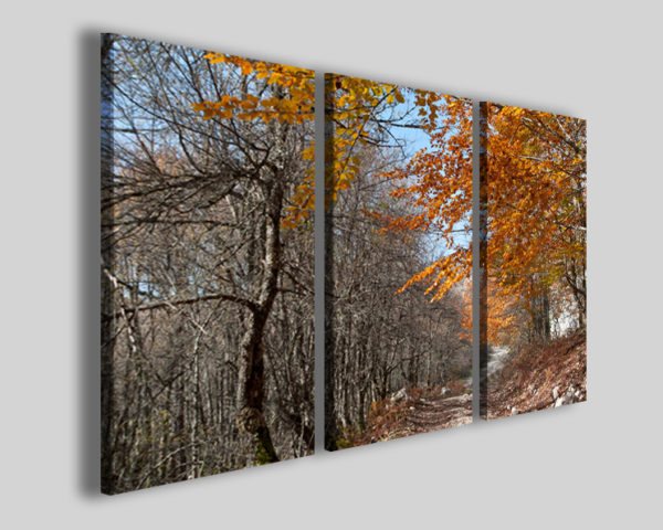 Quadro Colors autumn III stampa paesaggio autunnale