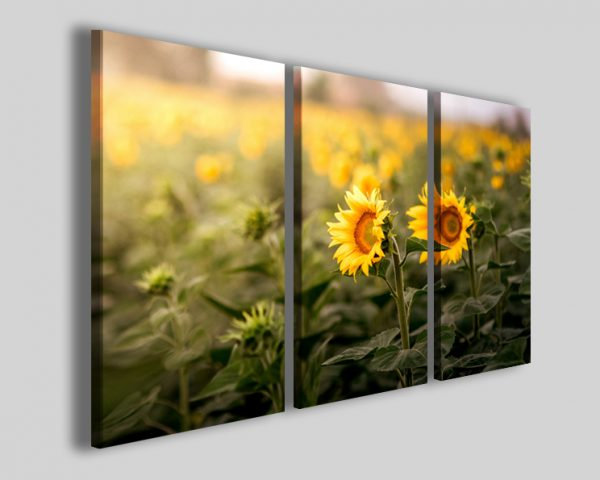 Quadro Couple Sunflower