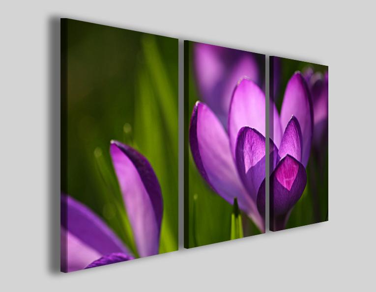 Quadro Crocus spring stampe fiori