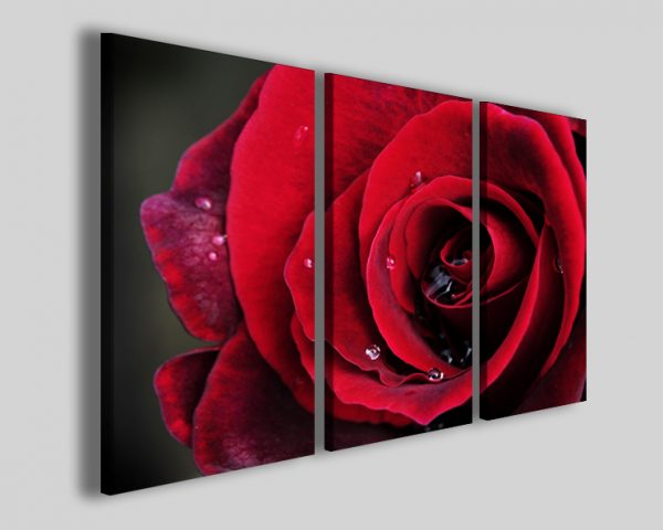 Quadro Red rose II