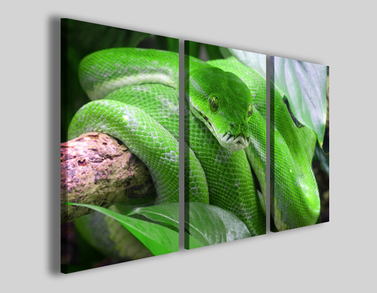Quadro Snake