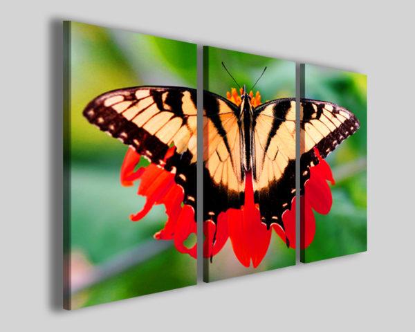Quadro farfalla Butterfly stampe natura