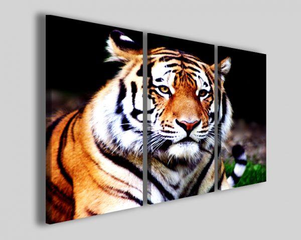 Quadro tigre Safari
