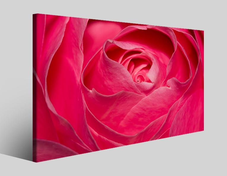 Quadro rosa Rose closeup stampa su tela