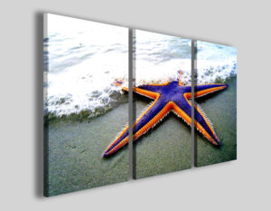 Quadri su tela Starfish stampe canvas pescheria