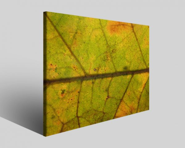 Quadro moderno astratto Tezt 87 stampa su tela