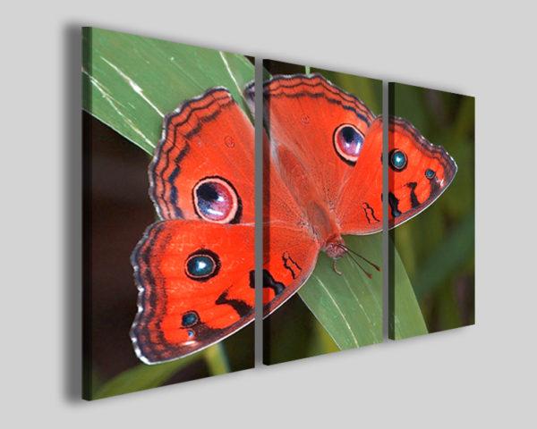 Quadri e stampe farfalla Butterfly eye arredamento