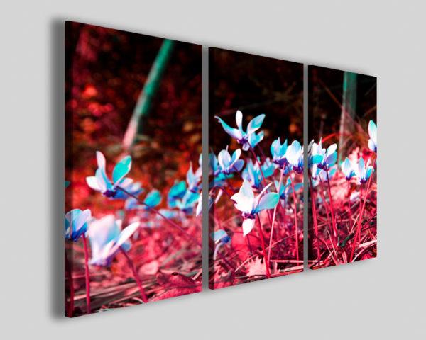 Quadri con fiori Ciclamine stampe colorate canvas