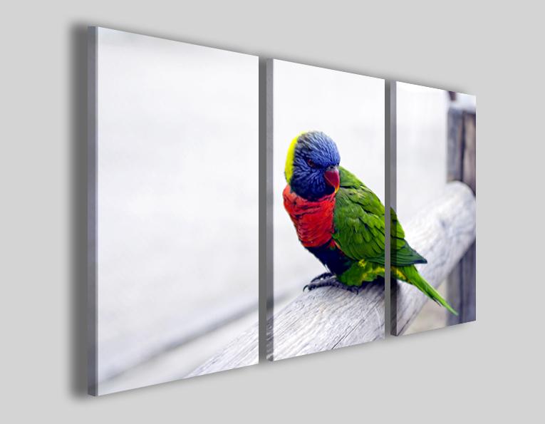 Quadri animali Colors of papagene stampe pappagallo