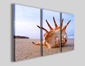 Quadro conchiglia Conch on sea II mare spiaggia