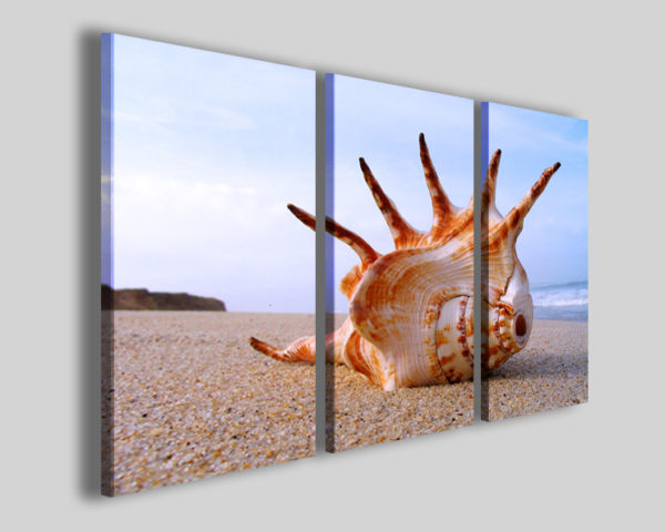 Quadro conchiglia Conch on sea II mare spiaggia