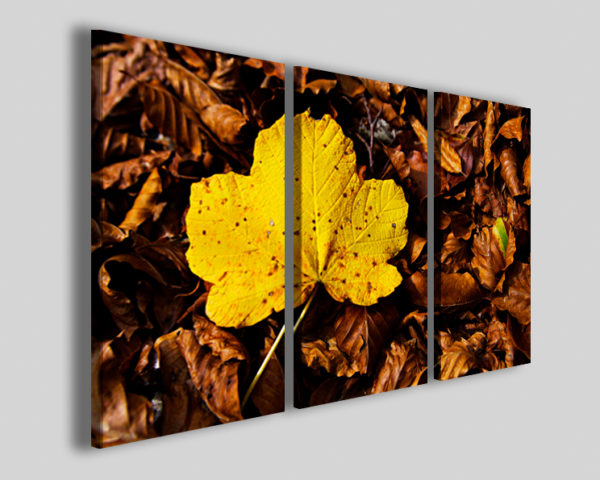 Quadri arredamento moderno Alburn yellow folie stampe canvas