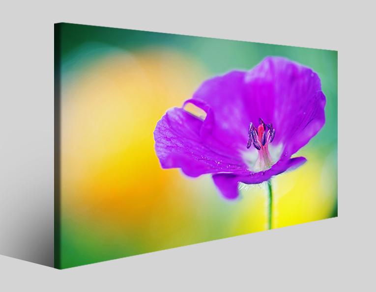 Quadro fiore Geranium stampa su tela