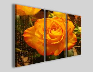 Quadri moderni Orange rose II stampe fiori