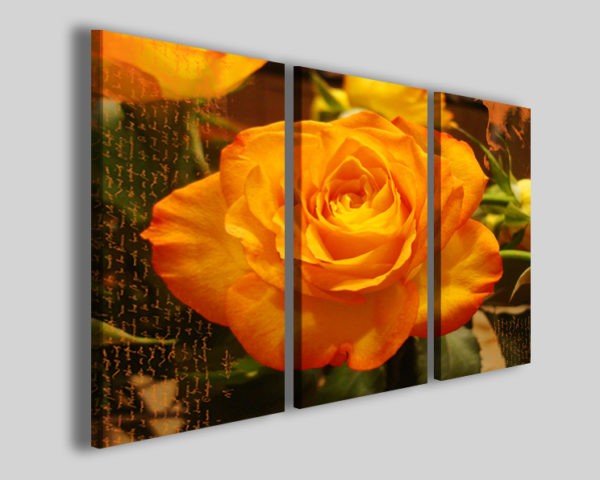 Quadri moderni Orange rose II stampe fiori